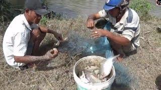 chài có mấy chài dính cả xô cá /fishing