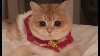 Котик на новом году😍😍😍😘😘