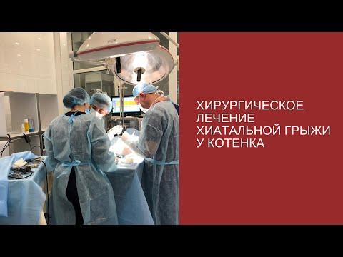 Хирургическое лечение хиатальной грыжи у котенка