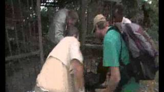 preview picture of video 'See Claude Being Removed from His Old Cage in the CAR'