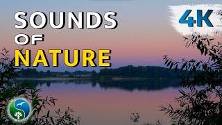 Утро, река, на рассвете. НАСЛАЖДЕНИЕ!   Природа, звуки деревни, пение птиц, цикады, релакс