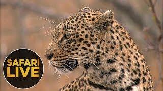 safariLIVE - Sunrise Safari - August 15, 2018