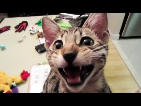 Youtube Video for 100 Pawsome Cat Jokes