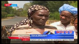 Tea farmers in Mt Kenya region have recorded a 35.9% drop in harvests of green leaf