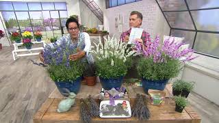 Roberta's 3-Piece Pink, White and Blue Hardy Lavender on QVC
