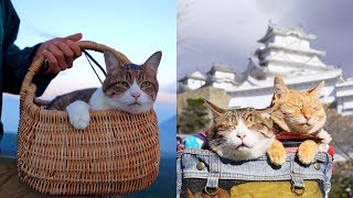 The Rescue Kittens Who Travel Japan! With Their Owner | Travel Pets