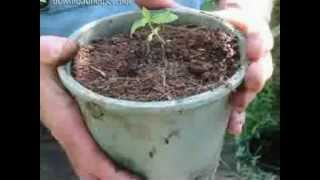 How To Grow Weed Outdoors