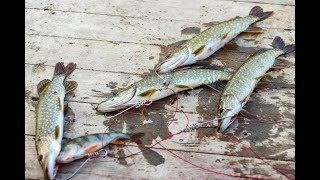 Отдыха и рыбалка в ахтубинской пойме
