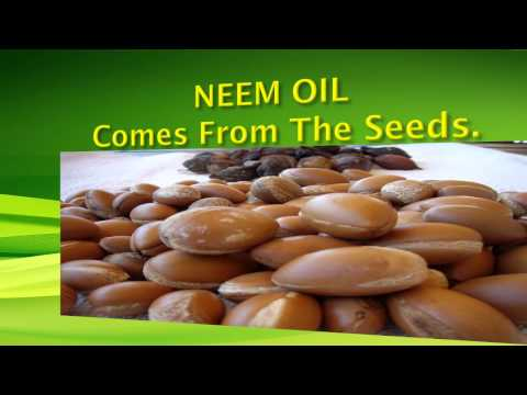 Video NEEM OIL ANTI-AGING BENEFITS!