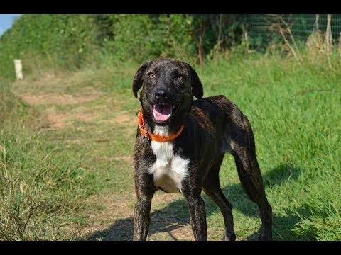 VIDÉO. Adopte un chien avec Corse-Matin : découvrez Kookaï
