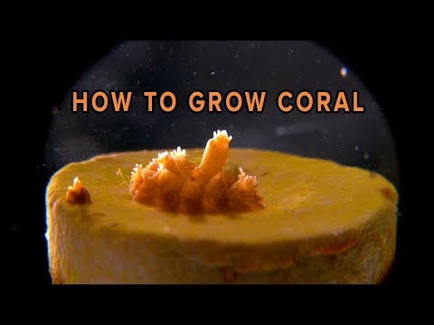 How New Coral is Grown