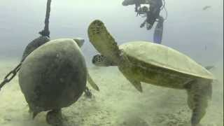 preview picture of video 'Oahu Koko Crater, Diving with Sea Turtles'