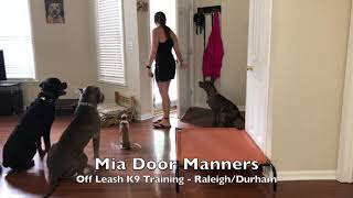 5.5mo Italian Greyhound Mia Before And After - Dog Trainers Raleigh Durham