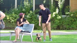Picking Up Girls With a French Bulldog