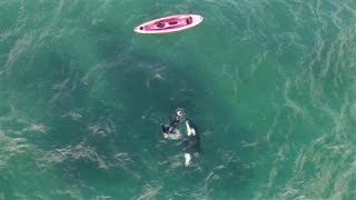 Orca and Kayaker Encounter Caught on Drone Video | Kholo.pk