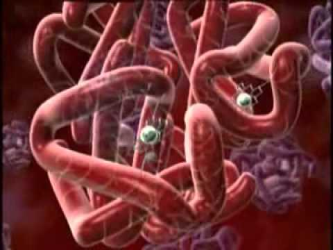 10 4: Minerals Important for Blood Function and Renewal