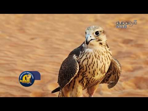 Farah The Falcon Predict Winner Of Nigeria v Iceland Match