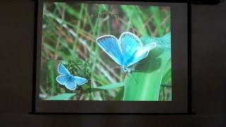 Mission Blue Butterfly Talk