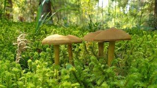 Мох, грибы, червячки, лес и всякое такое
