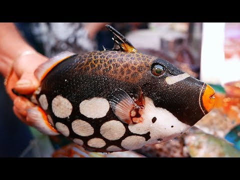 Japanese Street Food - CLOWN TRIGGERFISH Okinawa Japan Seafood