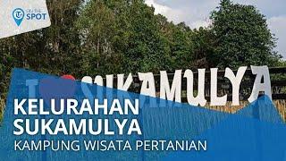 Wiki On the Spot - Kelurahan Sukamulya, Kampung Wisata Edukasi Pertanian di Prov. Sumatera Selatan
