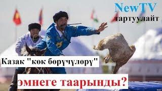 NewTV, КАЗАКТАР ЭМНЕГЕ ТААРЫНДЫ?