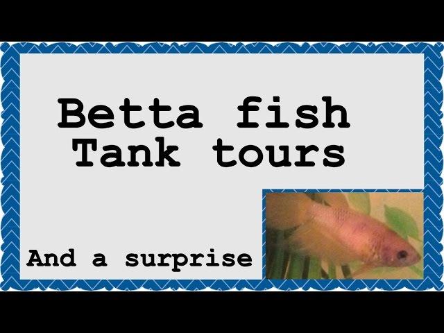Updated Betta fish tank tours #3