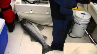 Team Teacher ! Chesapeake Bay Striper Fishing On A Very Rough day 2012