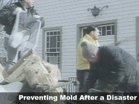 Preventing Mold After a Disaster