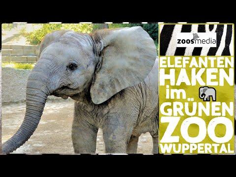 Film von Zoss.media: Die Elefanten und der Haken