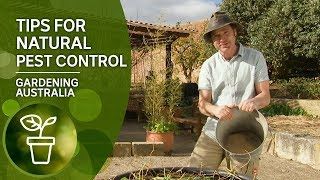 Top tips for natural pest control including rats, possums and birds