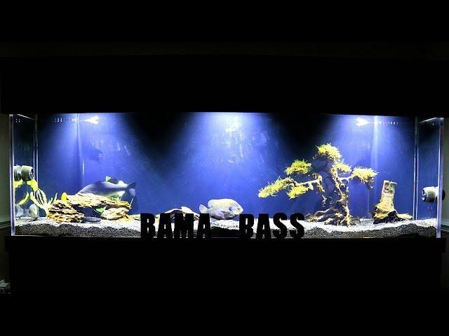 FRUSTRATED With This Aquarium!!