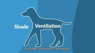 Use these tips to recognize and prevent heat-related emergencies in your pet!