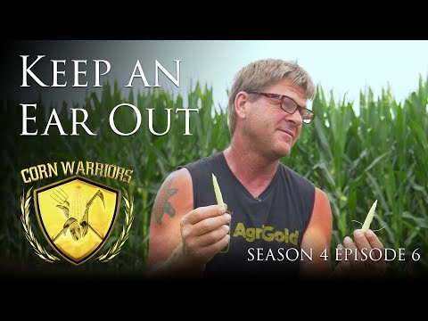 "Corn Warriors - Season 4 | Episode 6 - ""Keep An Ear Out"""