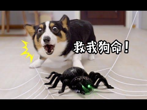 無敵霹靂大魔王蜘蛛我也很害怕
