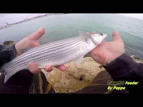 La pesca su sirene di video