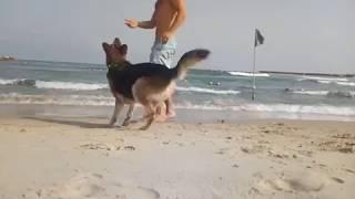 אימון עם הכלב
