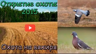 Смотреть онлайн Охота на дикого голубя
