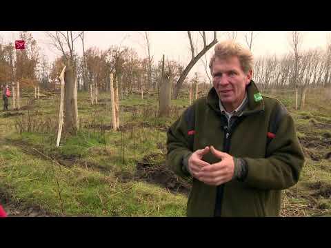 2.000 bomen de grond in aan randen Oostvaardersplassen