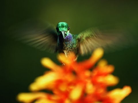 A Beautiful Look at What the World of Pollination Looks Like
