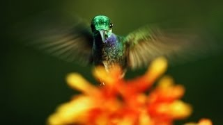 The hidden beauty of pollination | Louie Schwartzberg