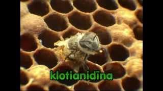 Vai bites Latvijā izmirs?