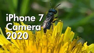 iPhone 7 Camera 2020 Full Review!