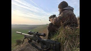 Foxing Through The Lambing Season