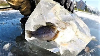 Outdoorsmen Capture Fish in a FROZEN Situation !