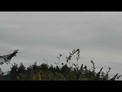 Video Of Deception Pass, WA