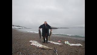 Рыбалка трески в баренцевом море