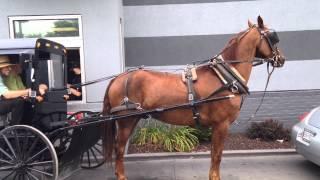 Amish Buggy at McDonald's Drive Thru