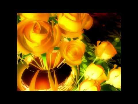 Футаж жёлтая роза