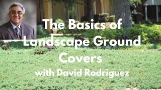 The Basics of Landscape Ground Covers